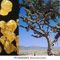 Тамян и дървото босвелия