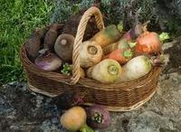 Кореноплодните зеленчуци – вкусни и полезни за здравето