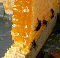 Свети Харалампий - покровител на пчеларите